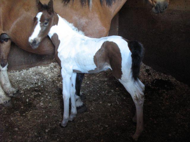 Foal hooves