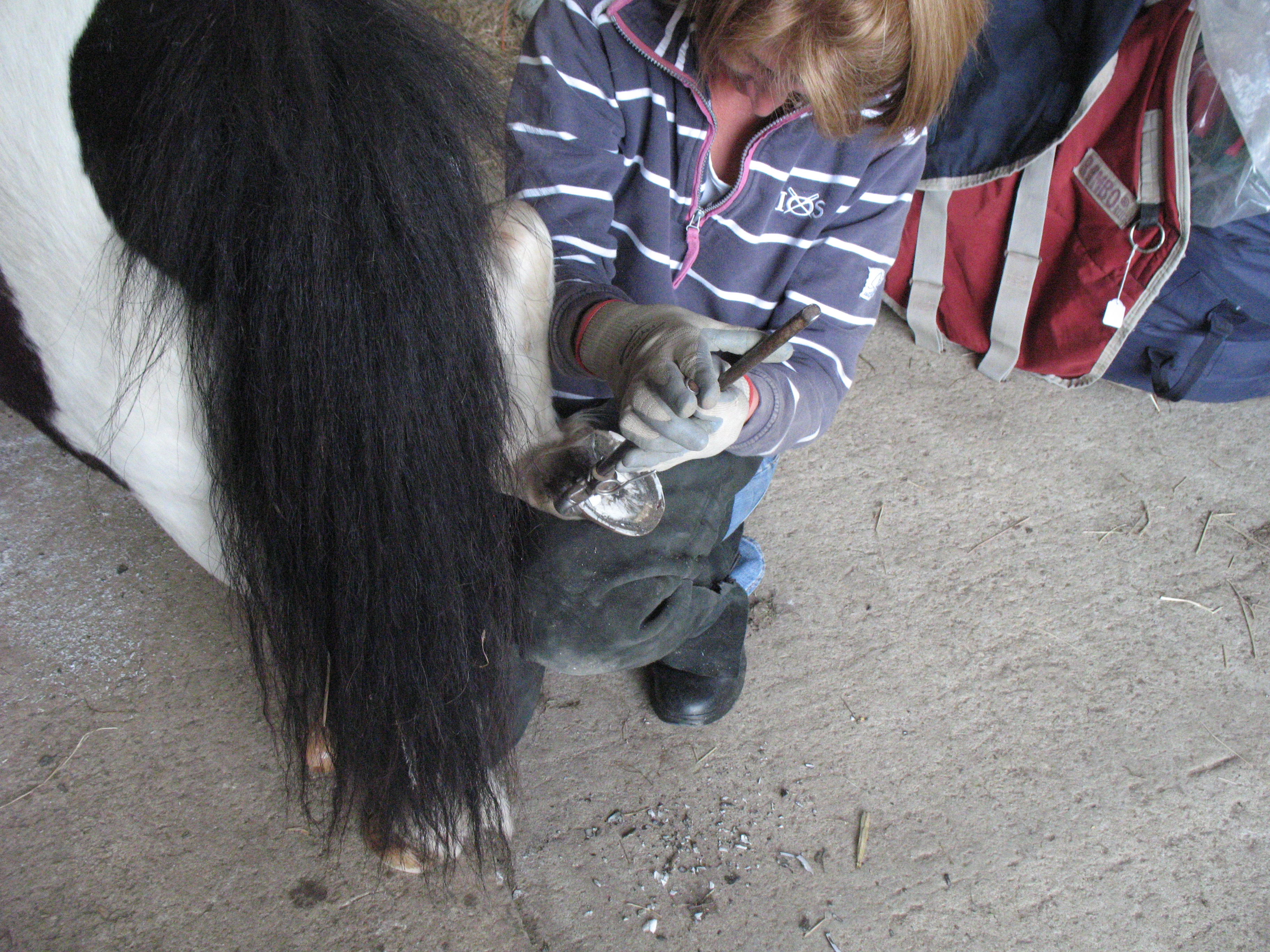 Equine Podiatry - trimming a little one